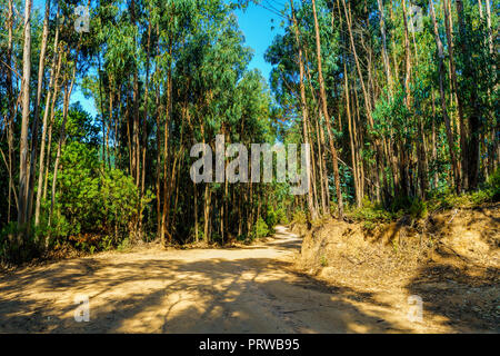 Curved dirt road in the midst of eucalyptus forest  . Sintra Portugal - Stock Photo