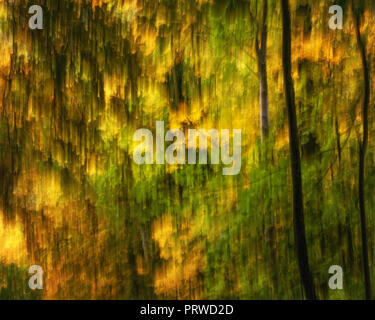 Seasonal abstract image of golden leaves in autumn falling off the trees in the woods - Stock Photo