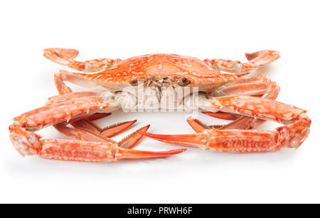 close-up view of boiled blue crab isolated on white background - Stock Photo