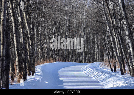 Scenery along the trail in Calgary - Stock Photo