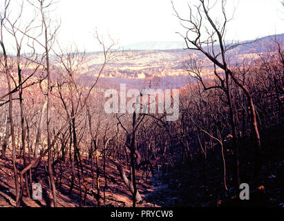 Burnt Trees and  Landscape from the 2009 Black Saturday Bushfires, Victoria Australia - Stock Photo