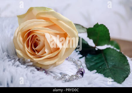 Beautiful tea rose with drops of dew, on pelage background. Place for text. - Stock Photo