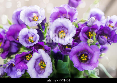 Beautiful Bouquet of Purple Eustoma flowers, Lisianthus, light background - Stock Photo