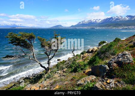 Tousled tree at the Beagle Canal, at the back harbour and town, Ushuaia, Tierra del Fuego Province, Tierra del Fuego, Argentina - Stock Photo