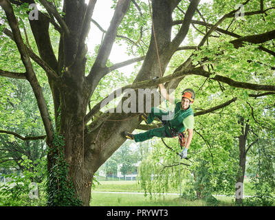 Tree cutter hanging on rope in tree - Stock Photo