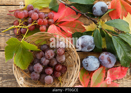Autumn still life with plums on branch, grapes in wicker basket, green, yellow and red leaves on wooden boards - Stock Photo