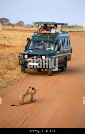 TSAVO EAST NATIONAL PARK, KENYA, AFRICA - FEBRUARY 25th 2018: A lion lying in road and stopping a safari jeep