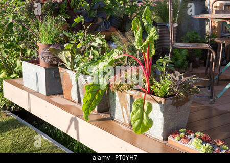 Decking area with vegetables and herbs growing in repurposed recycled galavanised metal containers, lettuce, chard, chives, sage, fennel, kitchen gard - Stock Photo