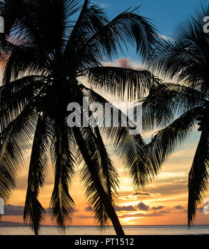 Palm trees in silhouette in front of orange and blue sunset sky - Stock Photo