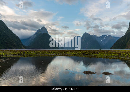 Milford Sound with low tide on a cloudy summer day, Fiordland NP, Southland district, Southland region, South Island, New Zealand, - Stock Photo