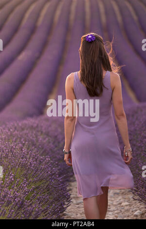 Brunette woman in purple dress in a lavender field at sunset, valensole, provence, france - Stock Photo