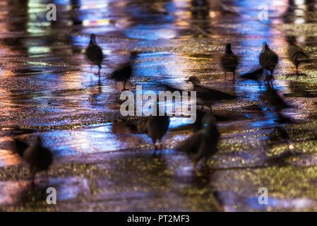 Pigeons in St, Mark's square, Venice, Veneto, Italy - Stock Photo