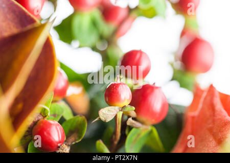 Autumnal flowers and berries in warm red and orange colours. - Stock Photo