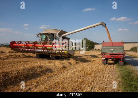 Wheat harvest on the Haarstrang in Soester Börde, in hot dry summer 2018, Germany, - Stock Photo