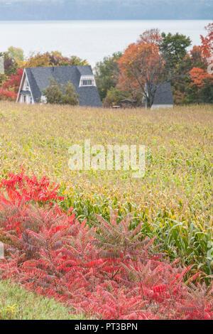 Canada, Quebec, Capitale-Nationale  Region, Neuville, field, autumn