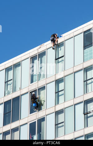 Window cleaners abseiling down an office building in Milton keynes, Buckinghamshire, UK - Stock Photo