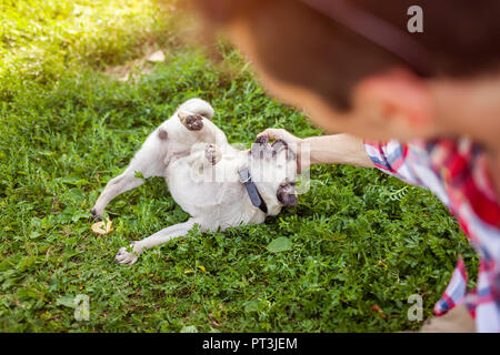Young man playing with pug dog sitting on grass. Happy puppy having fun with master. Guy laughing at funny pet - Stock Photo
