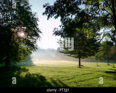 A parkland in early morning sunlight. Sun's rays shining through the trees in the park. Prater park in Vienna in September. - Stock Photo