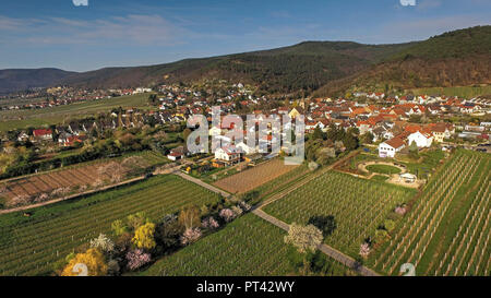 Almond blossom near Neustadt-Gimmeldingen, Pfalz, Palatinate Wine Route, Rhineland-Palatinate, Germany, aerial view - Stock Photo
