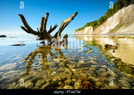 Germany, Mecklenburg-Western Pomerania, Rügen Island, Jasmund National Park, chalk cliffs, tree trunk in the water of the Baltic Sea - Stock Photo