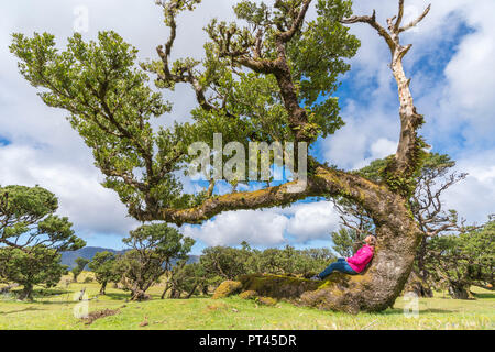 Woman sitting on a Laurel tree in the Laurisilva forest, Fanal, Porto Moniz municipality, Madeira region, Portugal, - Stock Photo