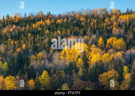 Canada, Quebec, Gaspe Peninsula, Gaspe, autumn, trees - Stock Photo