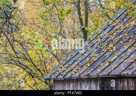 Canada, Quebec, Capitale-Nationale  Region, Deschambault, autumn