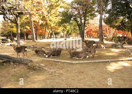 Deer Roam Freely at the Todaiji Temple in Nara, Japan - Stock Photo