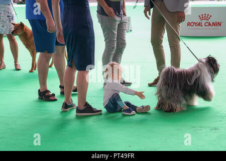 Amsterdam, The Netherlands, August 10, 2018: Little girl wants to play with a dog at The World Dog Show in Amsterdam - Stock Photo