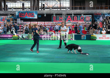 Amsterdam, The Netherlands, August 10, 2018: Border Collie in action during the world dog show in Amsterdam - Stock Photo