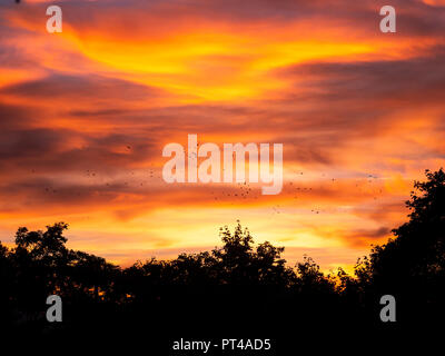 Beautiful image of birds flying during colorful sunset over trees - Stock Photo