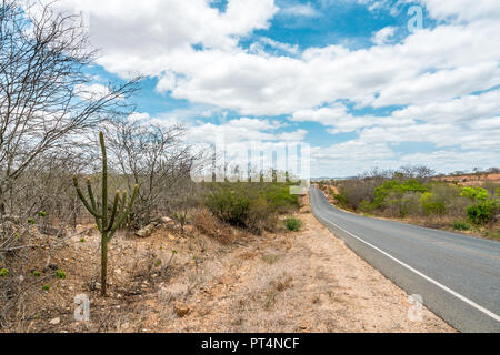 Cabaceiras, Paraíba, Brazil - February, 2018: Road to infinite with Cactus in a Caatinga Biome at Northeast of Brazil - Stock Photo