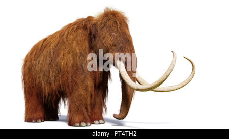 woolly mammoth, prehistoric mammal isolated with shadow on white background (3d illustration) - Stock Photo