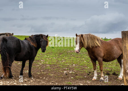 Horses in a field with a cloudy sky. Just before the rain. - Stock Photo