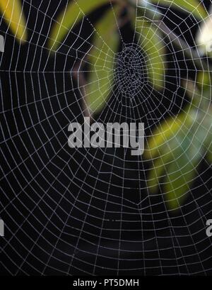Dew on Spiders Web with leaves on black background - Stock Photo