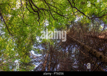 Forest with sick plants - Stock Photo