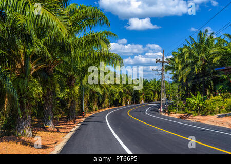 Emerald Pool, Yosemite National Park, Krabi, Thailand, Empty asphalt road in jungle with palms - Stock Photo