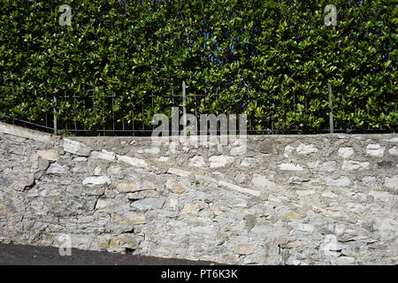 Europe, Italy, Bellagio, Lake Como, PLANTS GROWING ON WALL - Stock Photo