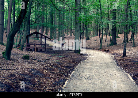 View of the path in the forest - Stock Photo
