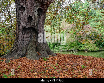 Ghost tree in the forest - Stock Photo
