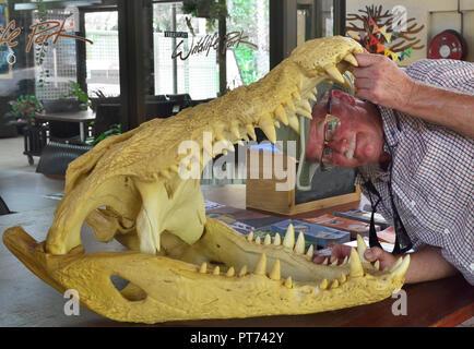 Tourist opening skull of crocodile in the Territory Wildlife Park, Cox Peninsula Rd, Berry Springs Darwin NT 0838, Australia - Stock Photo