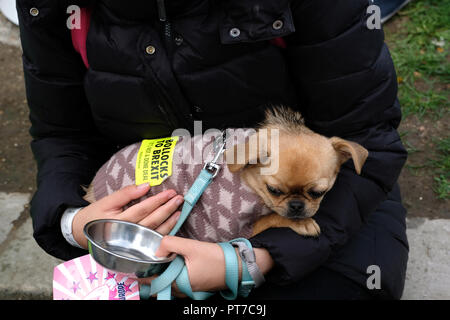 London, UK. 7th Oct 2018. Anti - Brexit march with dogs billed as the biggest 'pawlitical' march ever seen with thousands of dogs through central London to Parliament - to send Brexit to the doghouse! Credit: Rachel Megawhat/Alamy Live News - Stock Photo