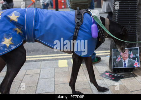 London, UK. 7th Oct, 2018. Wooferendum dog march: Dogs against Brexit march to Westminster in London Credit: Louise Wateridge/ZUMA Wire/Alamy Live News - Stock Photo