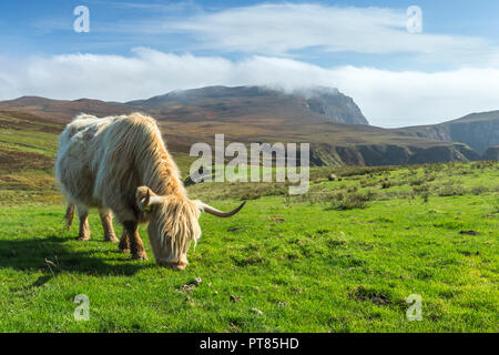 Landscape view of The Oa with a Highland cow grazing in the foreground, Islay, Scotland, UK, September 2017 - Stock Photo