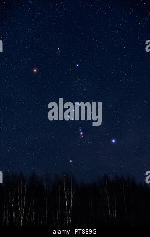 Starry sky and Orion constellation above birch forest in winter sky. - Stock Photo