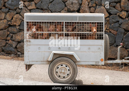 hunting dogs in transportaation cage, hounds in carriage  - - Stock Photo
