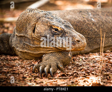 Guided excursion in Komodo National Park on Loh Liang, Sunda Islands, Indonesia