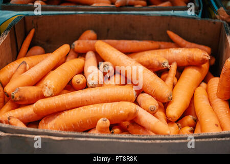 Red Carrots in a paper box on market. Fresh vegetables offering by farmers, organic food concept. - Stock Photo