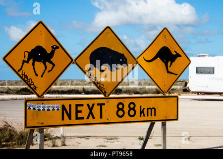 Road sign warning of wildlife on the road at the Nullarbor Roadhouse South Australia - Stock Photo