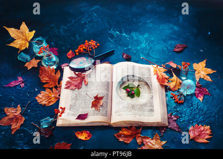 Secret storage book with last summer green leaves in autumn rain. Preserving fleeting joys concept with copy space - Stock Photo